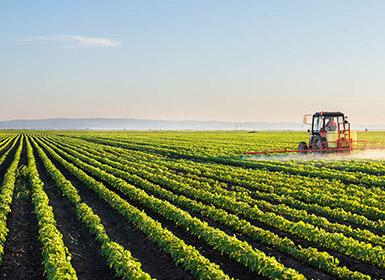 Oklahoma Farm Report - Syngenta's Axial Bold Cereal