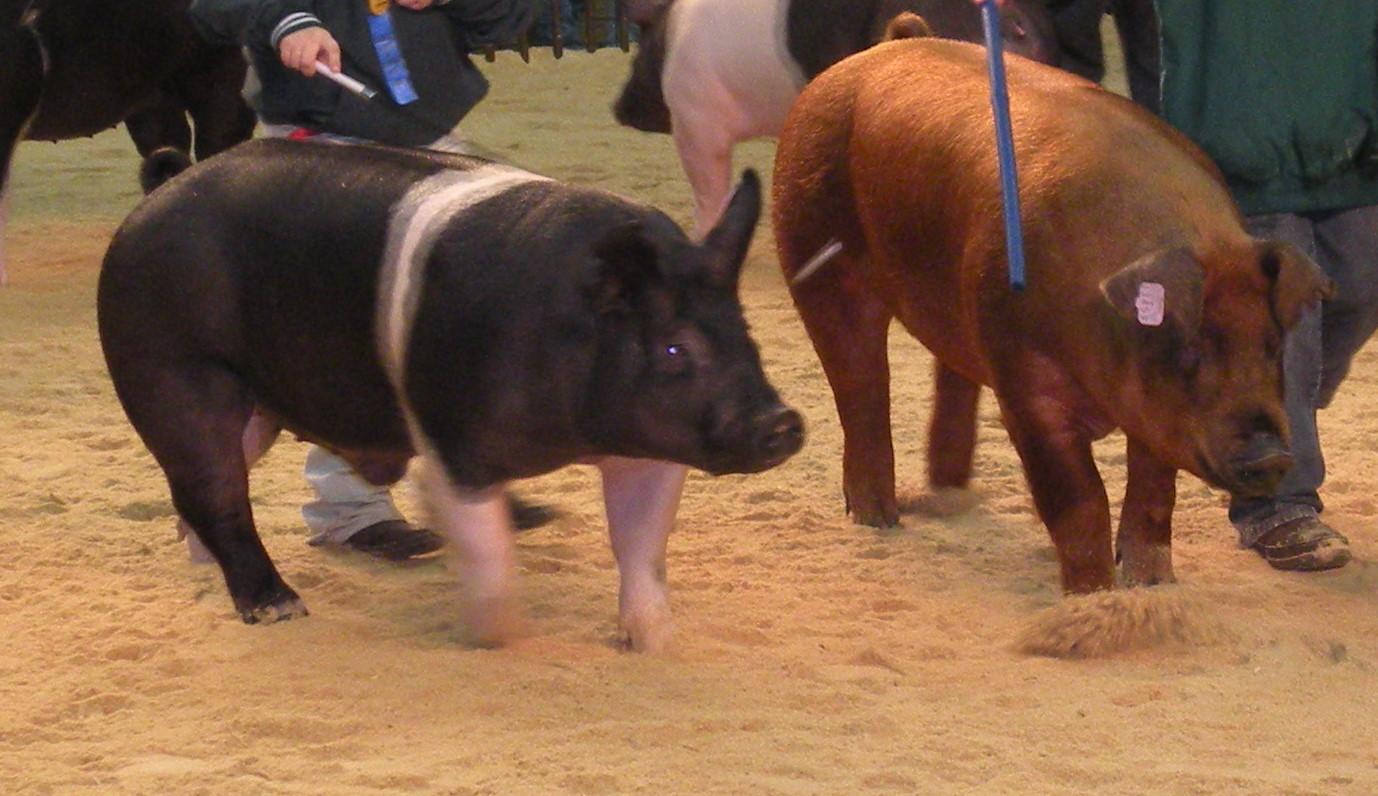 Quarterly Hogs and Pigs 06/27/2019