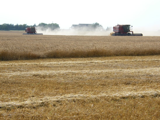 Oklahoma Farm Report - Frederick Area Trying to Start Wheat Harvest