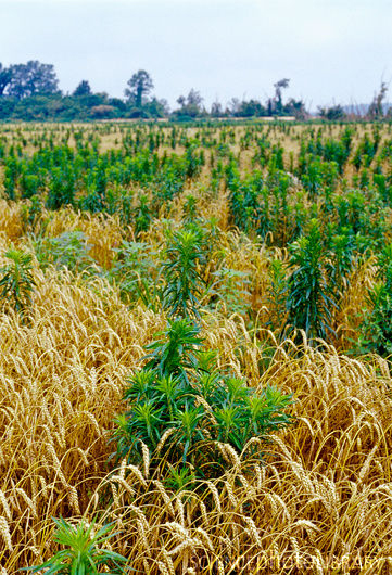 Oklahoma Farm Report - Weed Science Society of America Launches ...