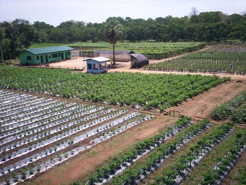 Oklahoma Farm Report Osu Botanic Garden Hosts Annual Oklahoma Horticulture Society Meeting