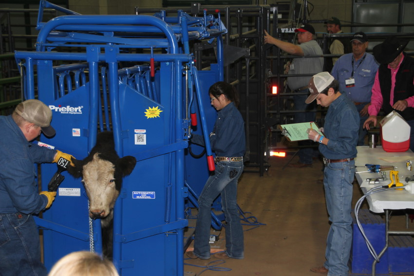 Oklahoma Farm Report - Porter FFA Wins 2012 Livestock Handling ...