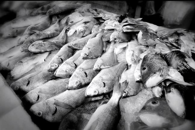 Oklahoma farm report fish farming has potential for for Farmers almanac fishing report