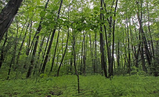 Oklahoma Farm Report Healthy Forests Reserve Program