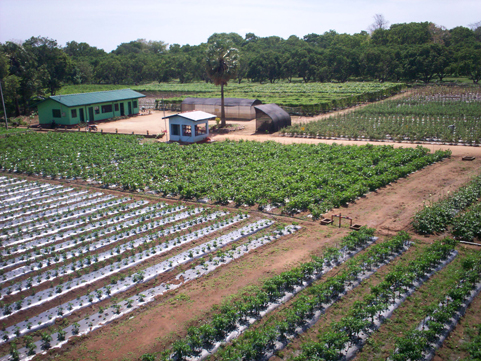 Oklahoma Farm Report - Spring Market Gardening School to Take Place ...
