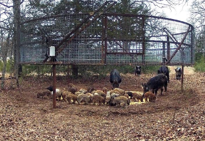 oklahoma farm report oklahoma ffa chapters volunteer to build